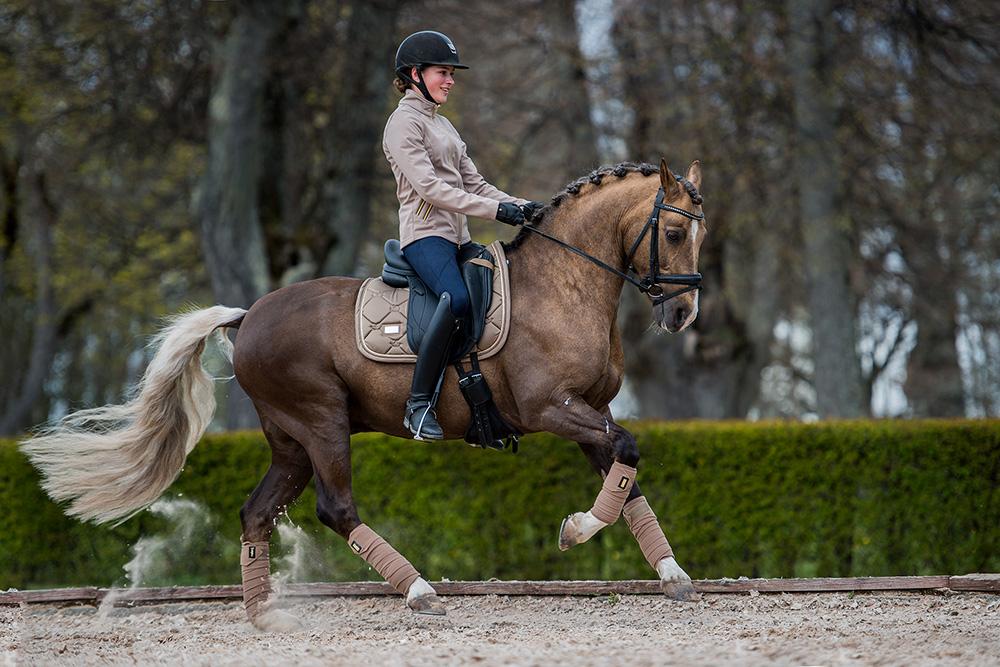 Champagne Cob Equestrian Stockholm Global