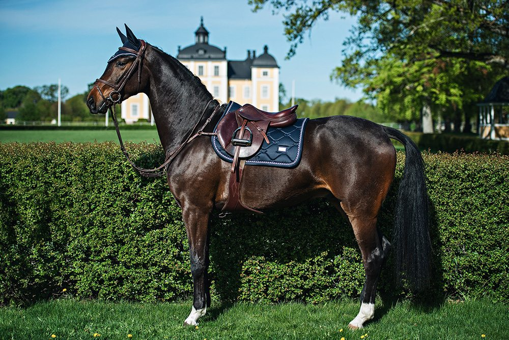 Ear Net Midnight Blue Equestrian Stockholm