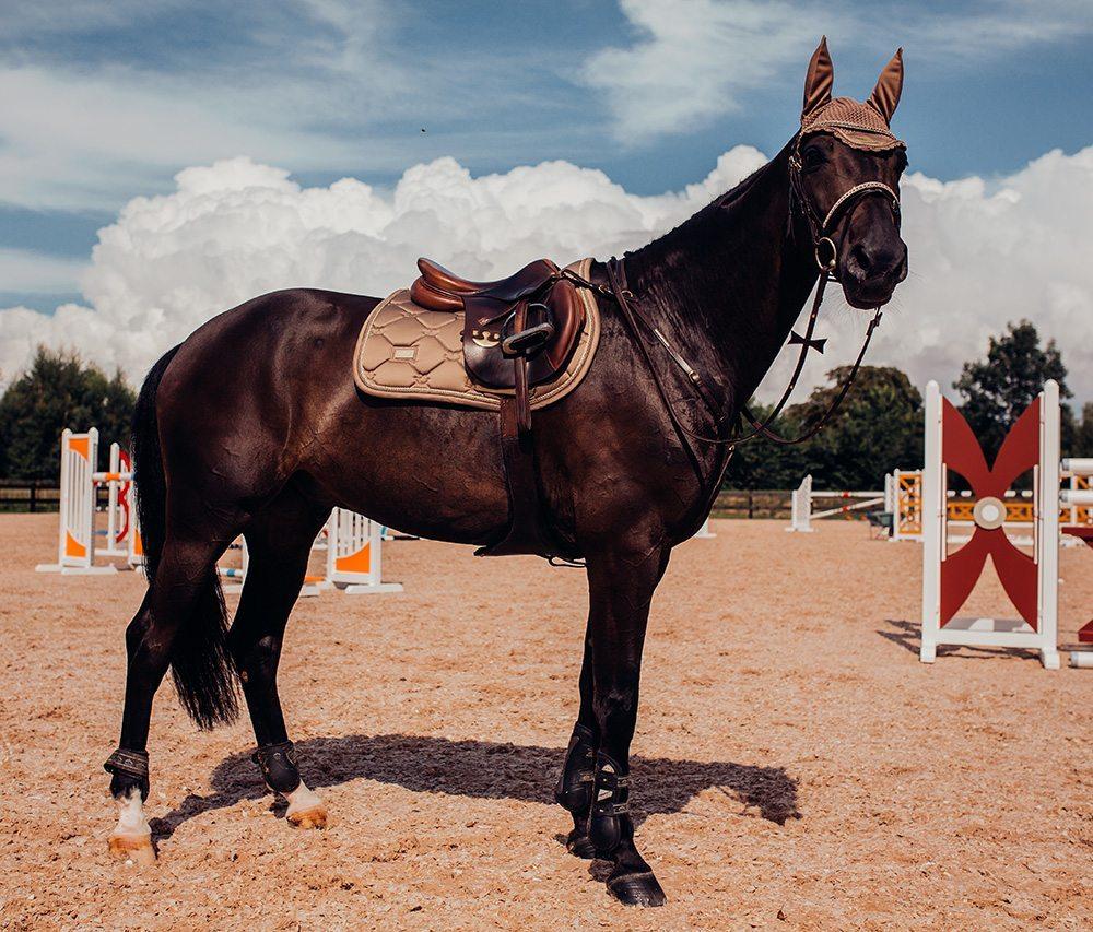 Global Views Horse: Equestrian Stockholm Global